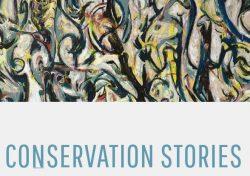 Conservation Stories PDF